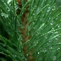 Güzellik İçin Yeşil Bitkilerden Yardım Alın !