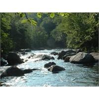 Nehri Akar Hayatın