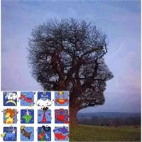 Burç Ağacı, Doğum Gününüzle Ağacınızı Bulun
