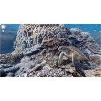 Google Maps Deniz Altına İniyor!