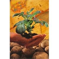 Bitkilerde Büyümeyi Düzenleyici Kimyasal Maddeler