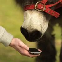Google Translate For Animals İle Hayvanları Anlama