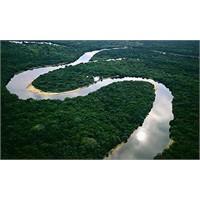 Amazonlar'ı Kirleten Deve Rekor Ceza Geldi