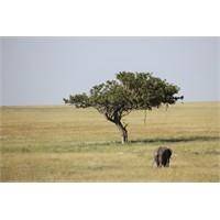 Serengeti İzlenimleri