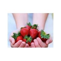 Meyvelerden Güzellik Sırları