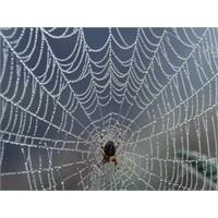 Dünyanın en büyük ve en sağlam örümcek ağı