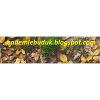 Sonbahar Sarı Yapraklar