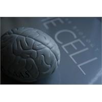 Sağlıklı Bir Beyin İçin 10 Öneri