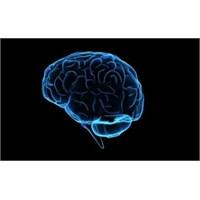 Dil Beynin Neresinde?