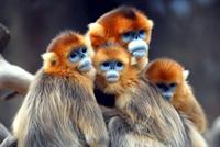 Hayvanların Doğal Yaşamından Kareler...