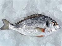 Balık Saklama Yöntemleri