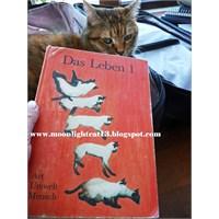 Hobi Odam -10- Yabancı Dil Kitapları