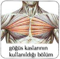 Dambıl Hareketleri Kombinasyonu: Göğüsler
