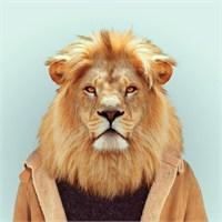 Sıradışı Hayvan Portreleri