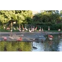 Prag Hayvanat Bahçesi Hakkında Bilmedikleriniz