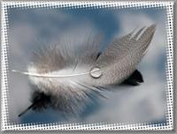 Sızden Gelenler..kuş Tuyu, Gul Dalı, Devetabanı