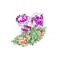 Anti-bakteriyel Ölüm Makinesi Deşifre Edildi