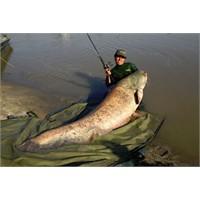 113 Kilo Balık Oltayla Yakalanır Mı ?