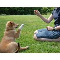 Köpek Eğitimi Nasıl Verilir ?