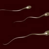 Spermin Sırları Çözülüyor