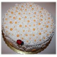 Papatya Pastası