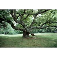 Doğum Tarihinizin Ağacı
