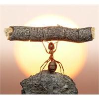 Hiç Karıncaları Merak Ettiniz Mi?
