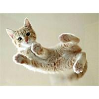 Ofis Başarısı Masadaki Yavru Kedi Resmine Bağlı