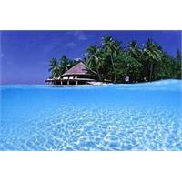 Hint Okyanusu Çiçeği Maldiv Adaları