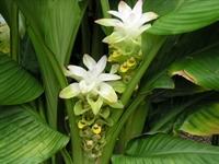 Hangi Hastalığa Hangi Bitki Kullanılmalı
