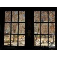 Baktığımız Pencere