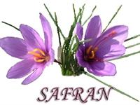 Safran Ve Safranın Faydaları