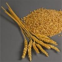 Bütün Tam – Buğdaylı Ürünler Eşit Değildir