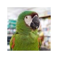 Kuş Beslenmesi Ve Bakımı