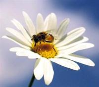 Arı İle Gelen Güzellik