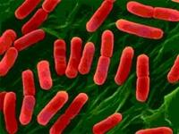 Uzmanlar Bakterilerin Direncini Çözdü