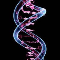 Epigenetik Ve Genetik Hafıza