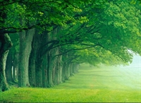Yeşil Renk Ve Yaşamımız