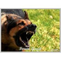 Köpekler Niçin Saldırır? Nasıl Korunulur?