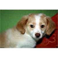 Yaz Oyuncakları: Evcil Hayvanlar