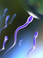 Sperm Sayısı Nasıl Arttırılır