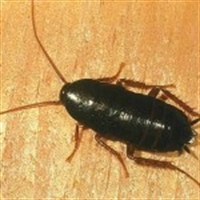 Böcek Zehiri Kullanımını Sınırlayın