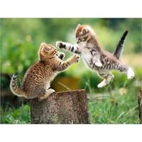 Gerçek Olmayan Kedi Videoları