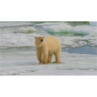 Dünyanın Kuzeyine, Svalbard'a 4 Günlük Yolculuk