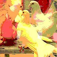 Aşk Ve Tesadüf Kuşları