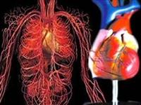 Kök Hücreden Yapay Kalp Kası Üretildi..