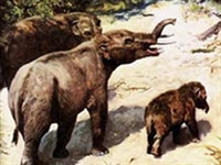 Endonezya'da Fil Fosili Bulundu