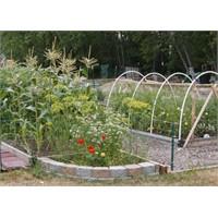Bahçemize Çok Fonksiyonlu Bitkiler Dikelim