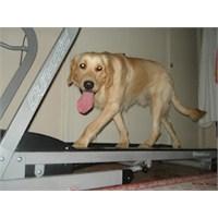 Köpeğinizin Enerjisini Nasıl Atabilirsiniz ?