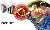 Bağışıklık Sistemi Kanserli Hücreleri Koruyor